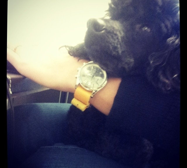 My Michael Kors Chronograph on a yellow leather NATO strap from #cheapestnatostraps.com  #michaelkors #chronograph #natostrap #natoband #leathernatostrap #klocksnack #watchuseek #instawatch #watchesofinstagram
